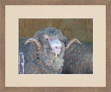 Schafsjahr