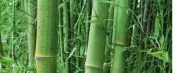 ecocare-bambus